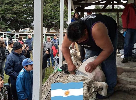 Arsemio Saihueque, representante de Argentina en Categoría Tijera y Speed Shear