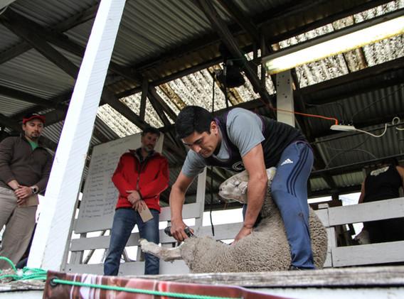 Pablo Coñuecar, 2do lugar Categoría Speed Shear