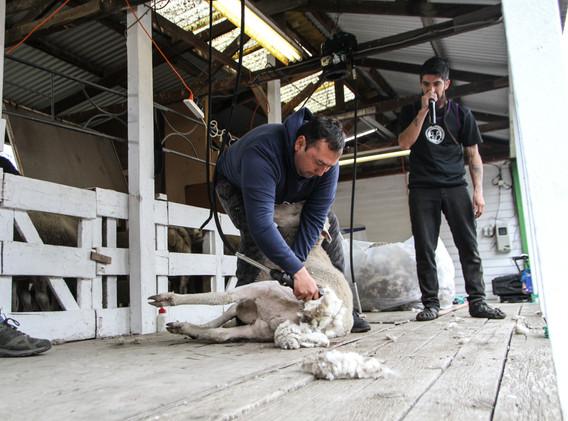 Franco Palma, Categoría Speed Shear