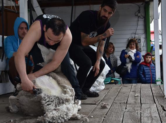 Jorge Almonacid, Categoría Speed Shear