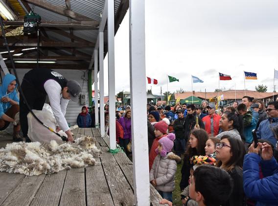 Categoría Speed Shear