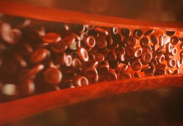 Células sanguíneas fluindo