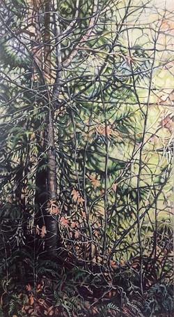 sleeman-Forest