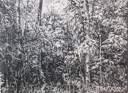 sleeman.forest