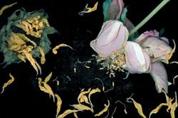 EdwardPeck-Mingus' Summertime III