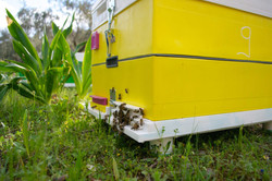 Το καλύτερο σπίτι για την μέλισσα