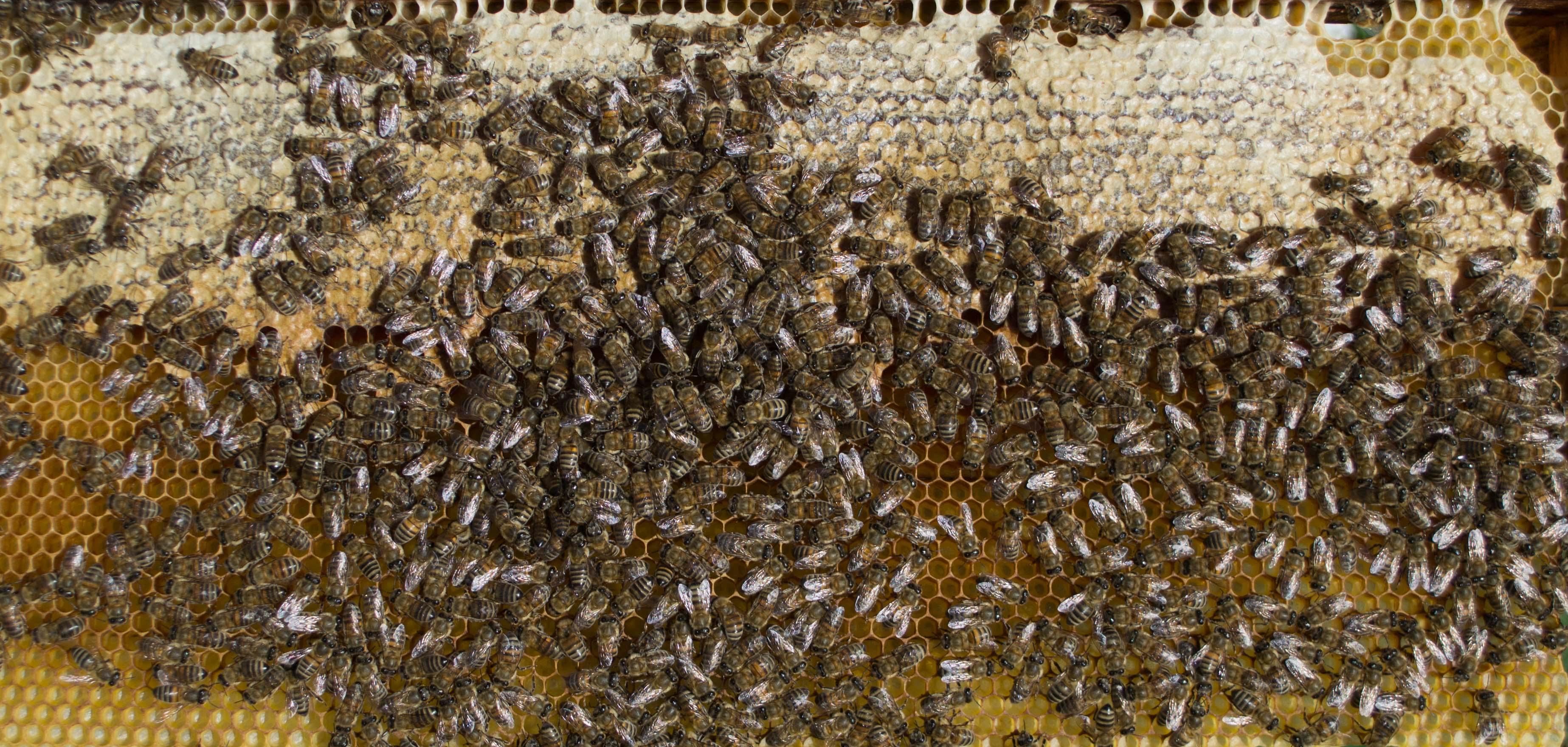 Μέλισσες και μέλι