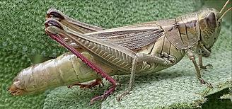grasshopper-3779693_1920_edited.jpg