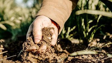 Soil_edited.jpg