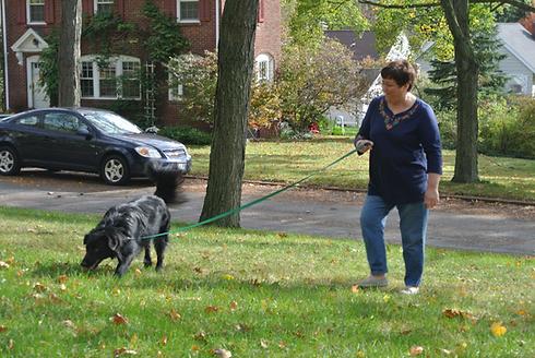 Pet sitting Rochester NY, Dog walking Rochester NY
