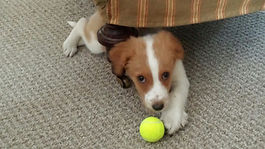 Pet sitters Rochester NY, Dog walkers Rochester NY