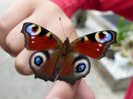 Lady Löwenzahn trifft Madame Butterfly