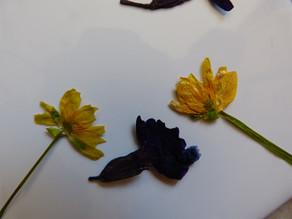 Blumen pressen ohne Blumenpresse