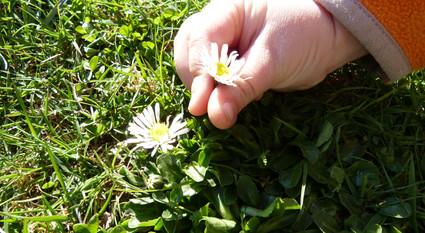Blumen pressen mit der Mikrowelle