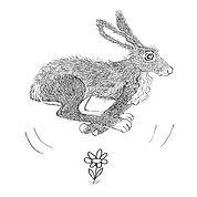 Hare runningMR.jpg