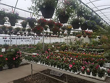 Hanging Container Gardens, Annuals