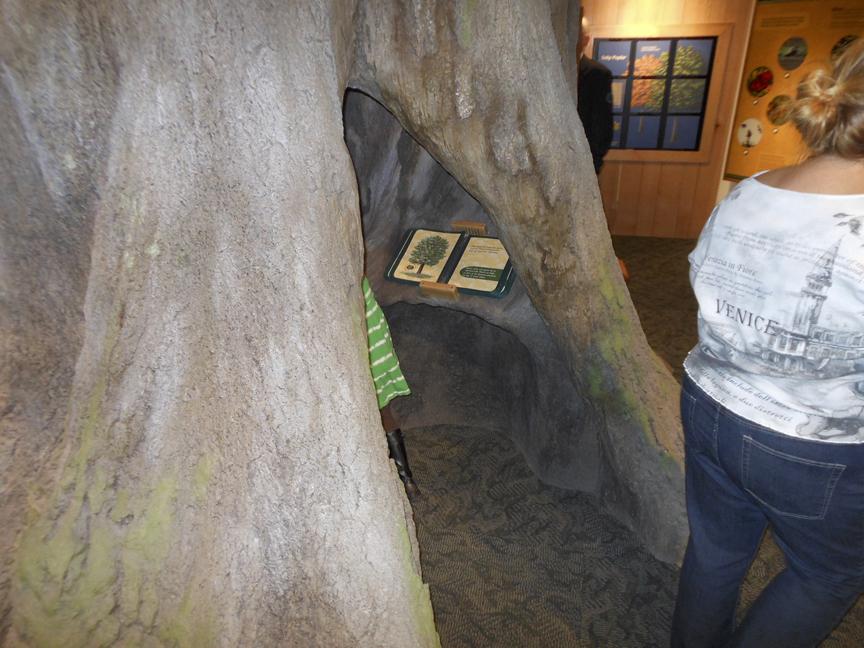 Split rock tree VB 3
