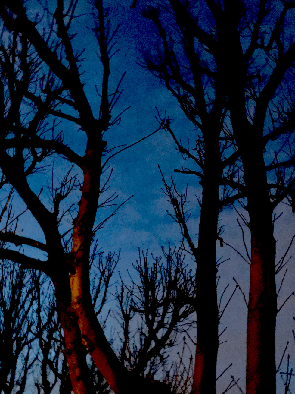 Twighlight Trees March 2020