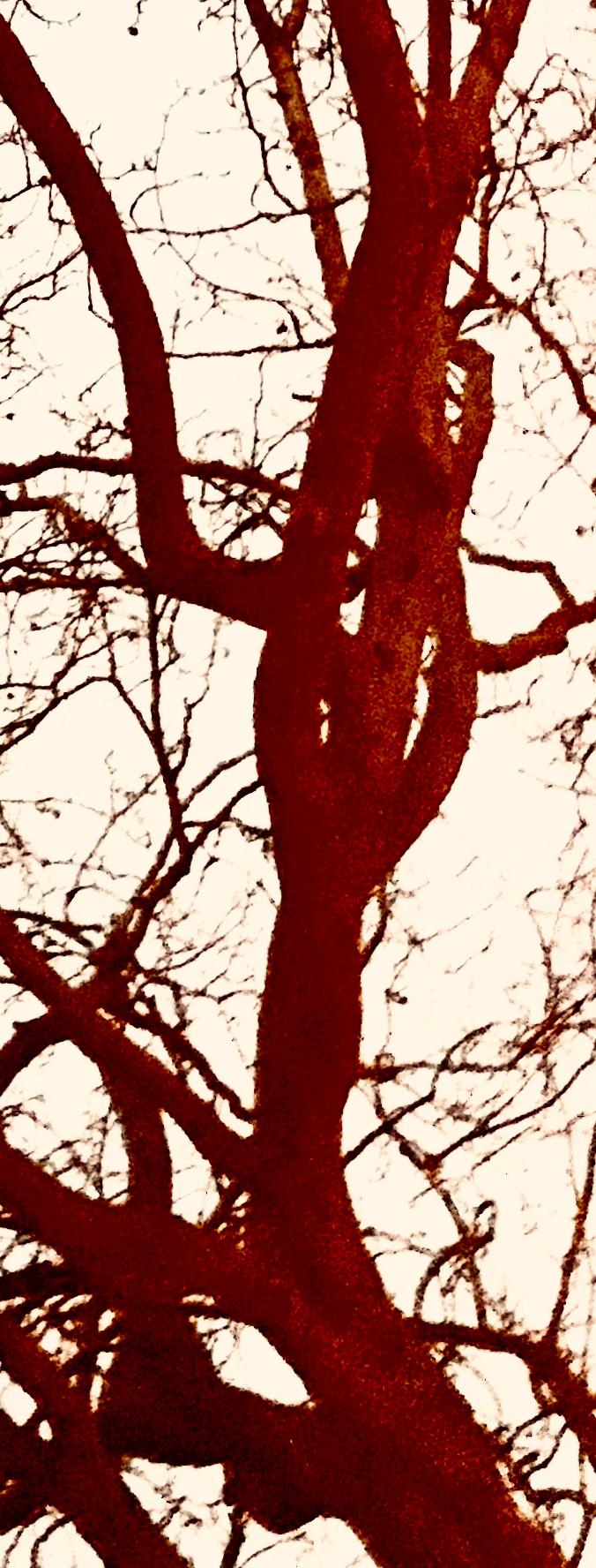 Terracotta Tree 2020