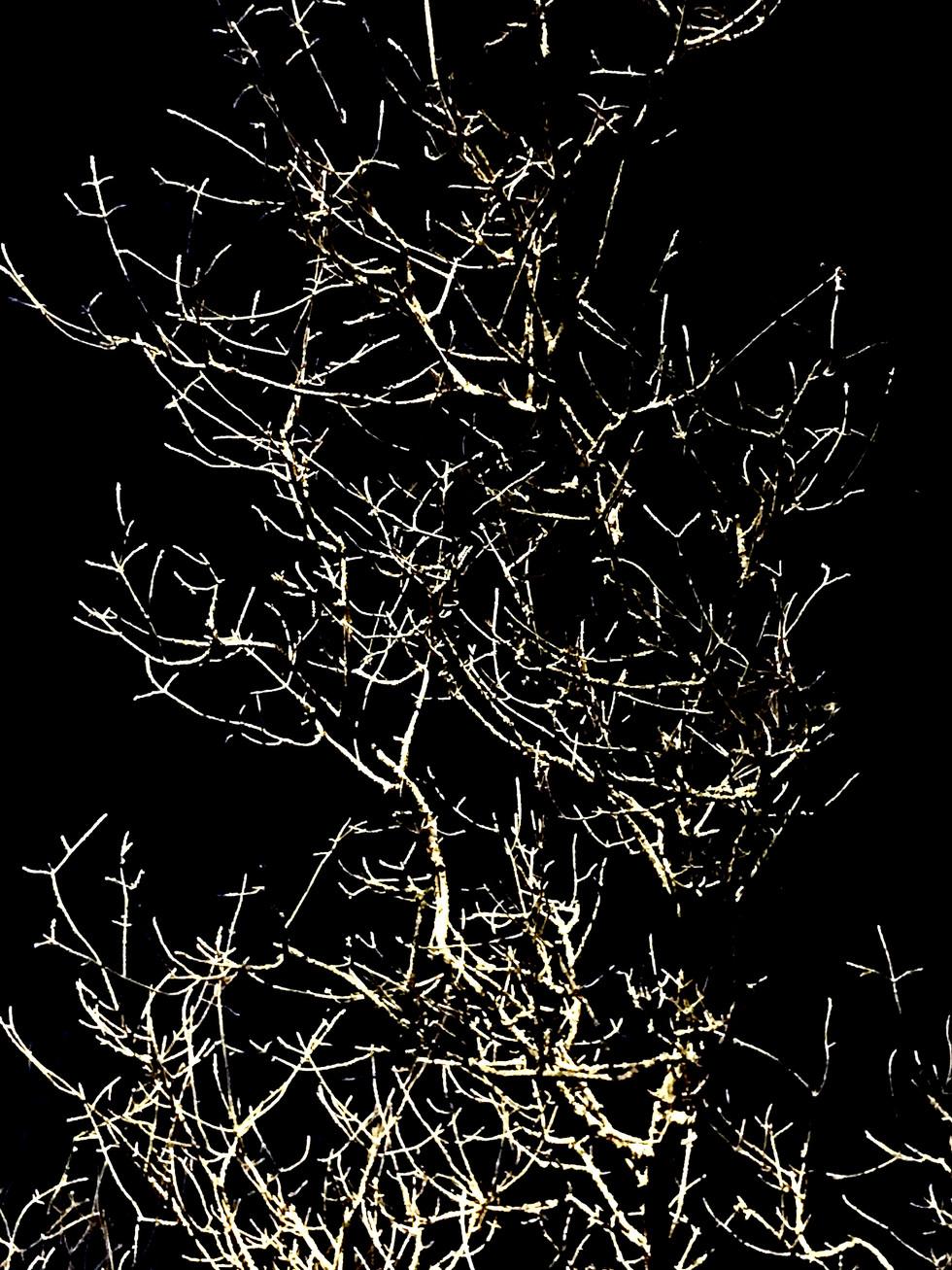 Night Light 2020