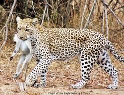 Leopard%20with%20Signature%20(2)_edited.