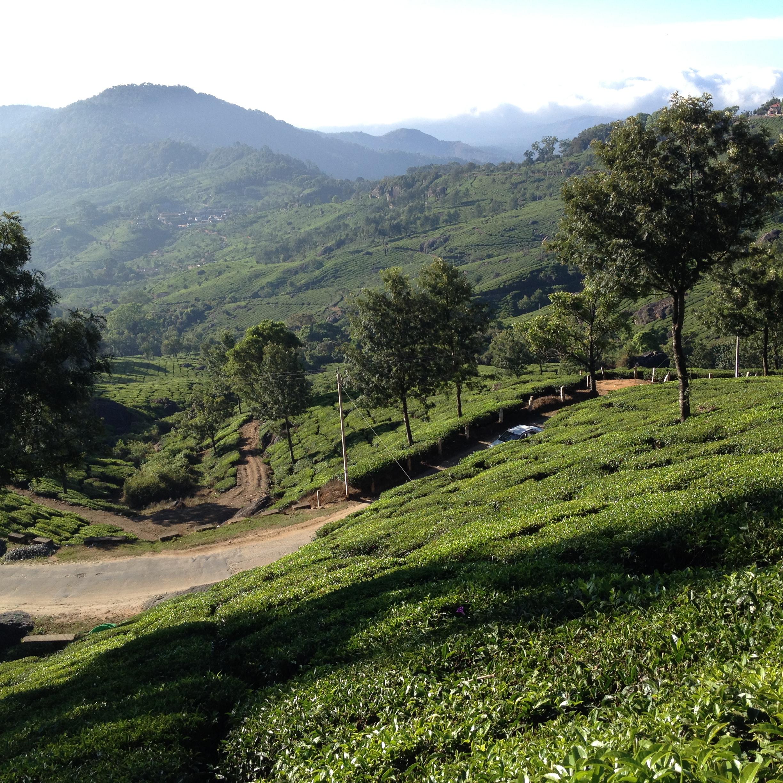 Munnar_hills