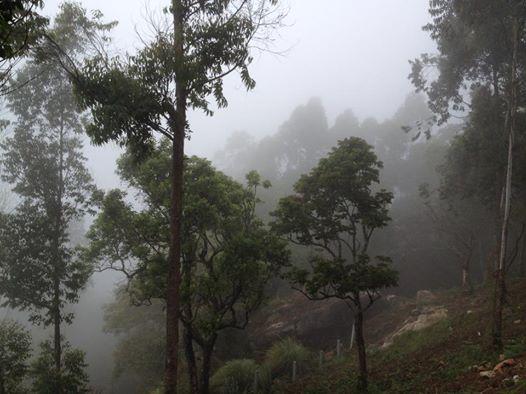 Munnar_Kerala