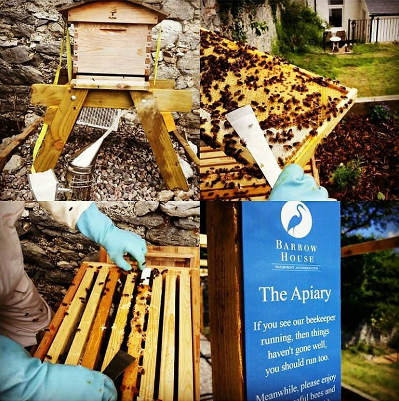 Bee Keeping at Barrow House, Kerry, Irel