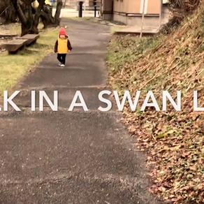 WALK IN A SWAN LAKE(お幕場大池公園)