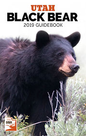 2019_bear.jpg