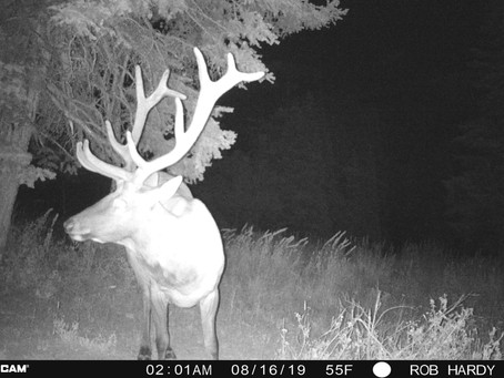 Pre Season Scouting: Trail Cams