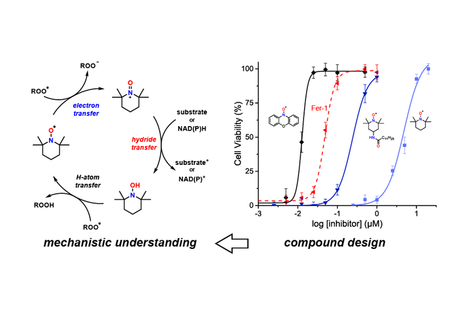 Our paper on the reactivity of nitroxides with peroxyl radicals is published in JACS.