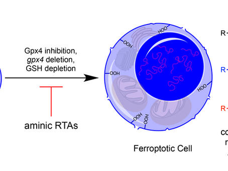Ron's work on inhibition of ferroptosis by  diarylamine antioxidants is accepted for publication