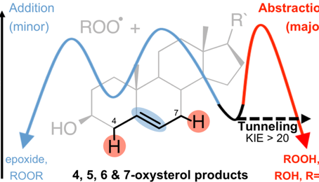 Our paper on the distribution of cholesterol autoxidation products has been accepted in JACS!