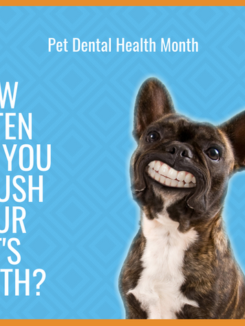 February is Dog Dental Month!
