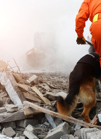 Pet Disaster Emergency Plan