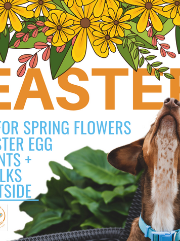 Easter Decorations- How to protect my Dog or Cat?