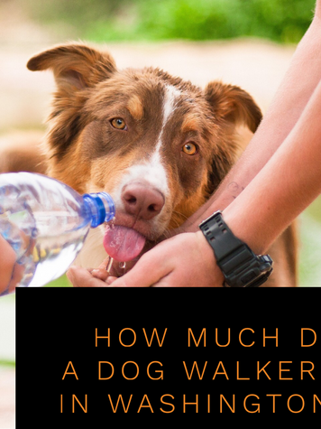 Cost of Dog Walking in Washington, DC