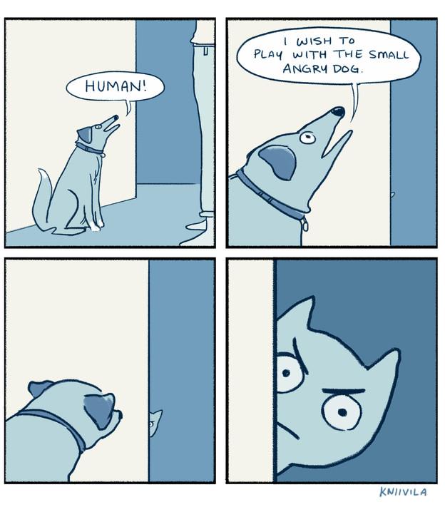 Small Angry Dog