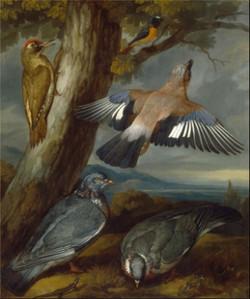 EU9078 Doves by Francis Barlow.jpg