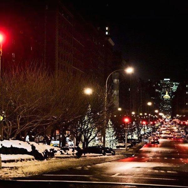 Park Avenue Christmas Trees (Photo Courtesy of TracysNewYorkLife.com