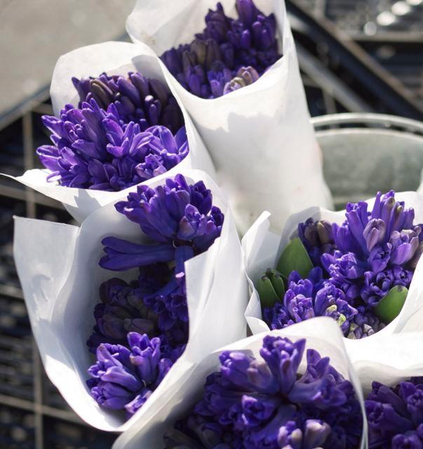 Hyacinths Fiori da Fenice