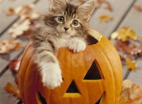 Weekend Market Picks October 14 & 15, 2017: Autumn Is Here