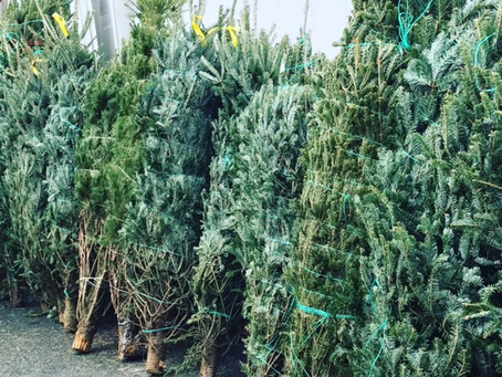 Weekend Holiday Markets December 10 & 11, 2016: Local Holiday Greenery