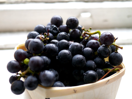 There Is A Right Way To Eat A Concord Grape