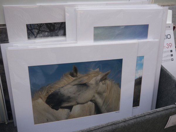 Images of Gorgeous Horses and More by Patricia Murray Photography