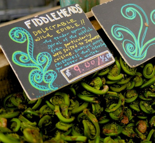 Cooking with Fiddlehead Ferns from Tamarack Hollow Farm