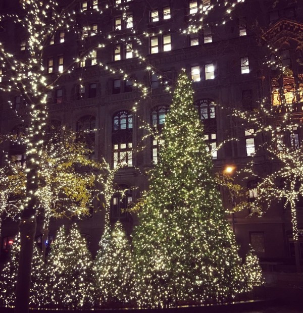 Holiday Grove at Zucotti Park (Photo by Markets of New York City)