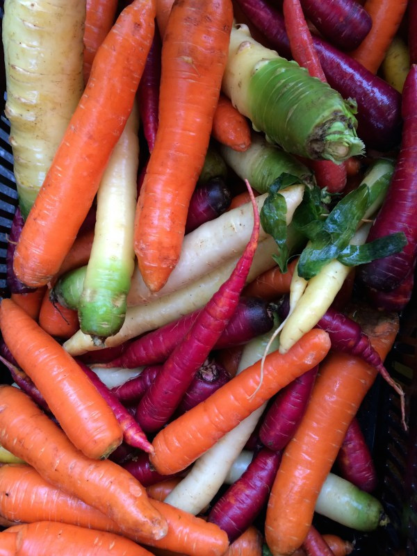 A Rainbow of Carrots from Paffenroth Gardends