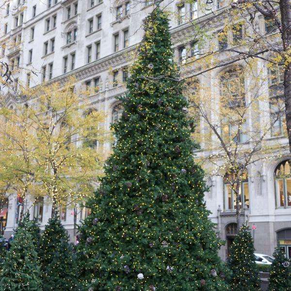 zucotti park christmas tree